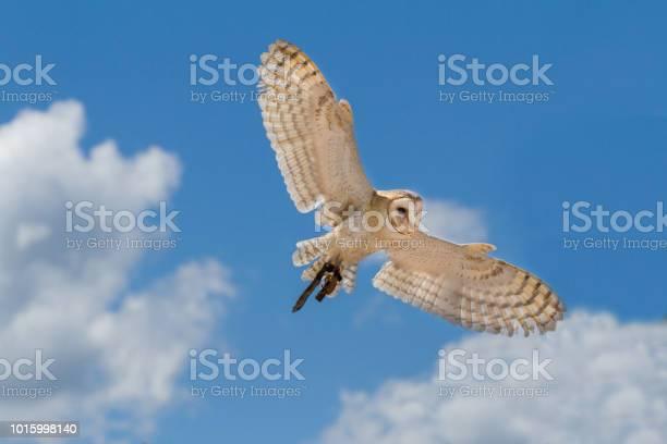 Owl in flight picture id1015998140?b=1&k=6&m=1015998140&s=612x612&h=i3bfftsdxxcfagtapscinyx1yxbb0scxso4q3pefo8y=
