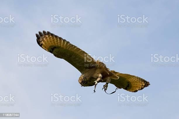 Owl in flight picture id118087244?b=1&k=6&m=118087244&s=612x612&h=t1xyal0irpk3kubvjelp3lcumulxdcupdlowmjqctos=