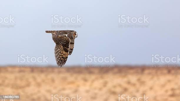 Owl in flight picture id186380785?b=1&k=6&m=186380785&s=612x612&h=fqr mnhj uhxkyowztwc86wwnlo9sp jhtsvtrp7jom=
