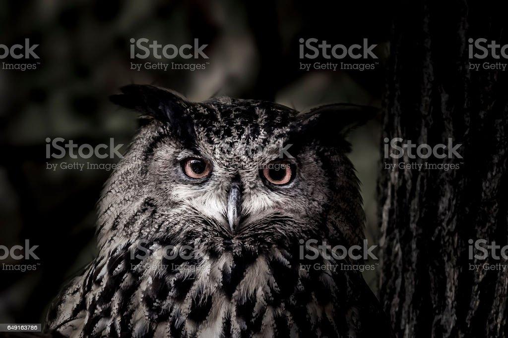 Owl in the dark stock photo