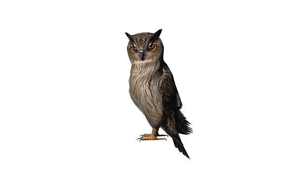 owl - isolated on white background - eule zeichnung stock-fotos und bilder