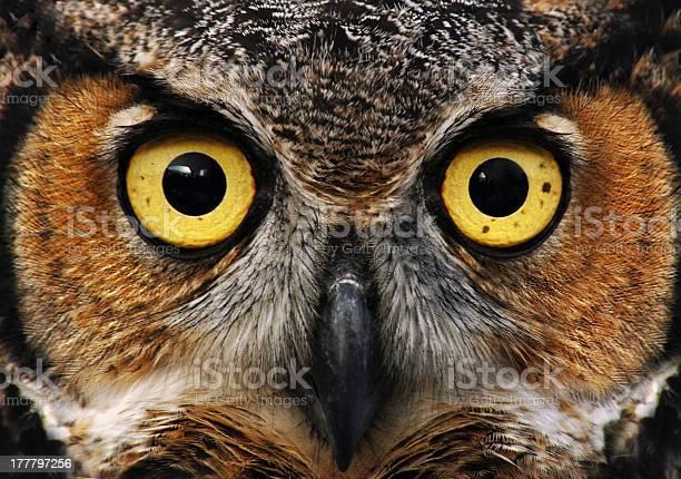 Owl look picture id177797256?b=1&k=6&m=177797256&s=612x612&h=dyxwufd34averwxy82uam79svcfch3wcejdeiqur1rk=