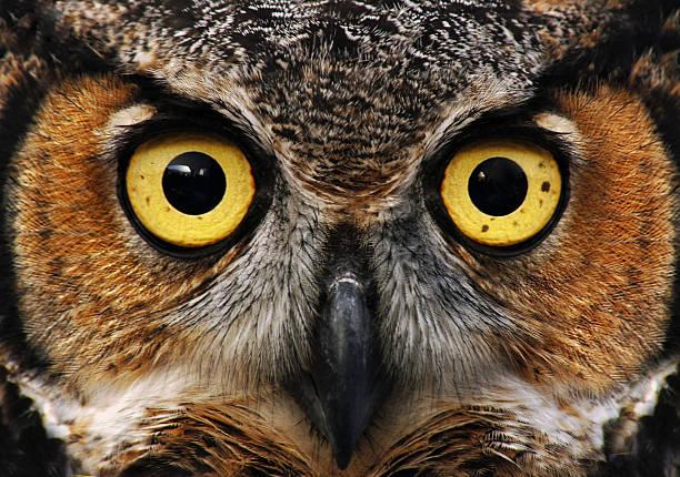 Owl look picture id177797256?b=1&k=6&m=177797256&s=612x612&w=0&h=7ka4idbg5t72iptefn4cstqwclkmevgp3uxlcpjkdne=