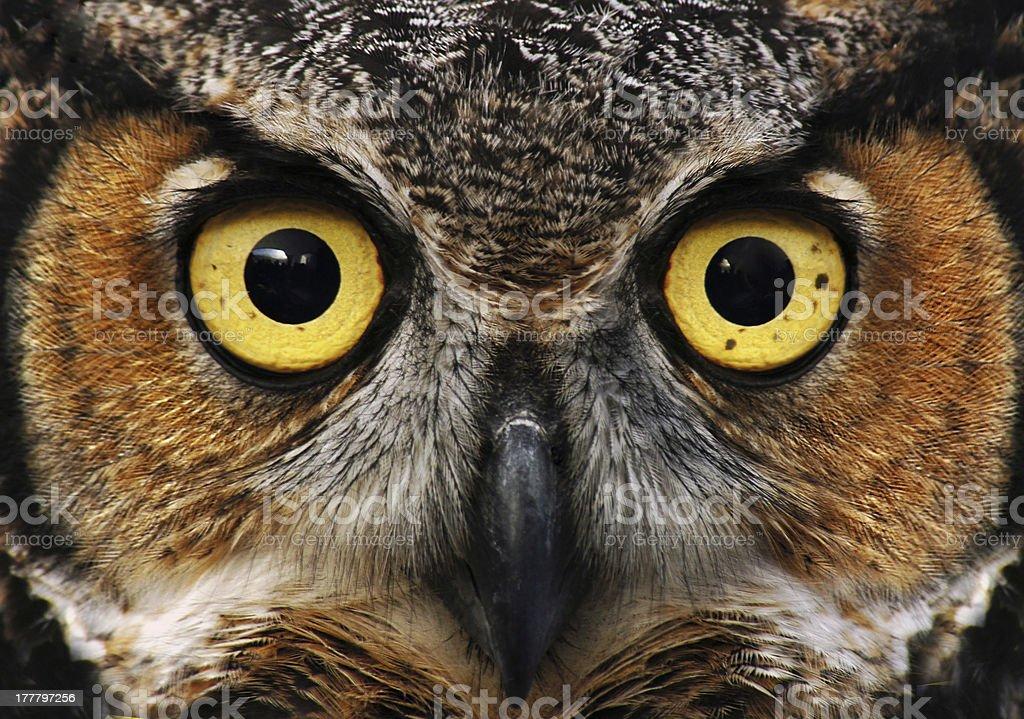 Owl look stock photo