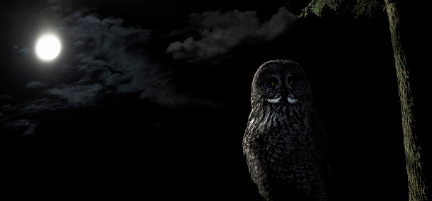 Owl perched in a tree at night under the light of a full moon.