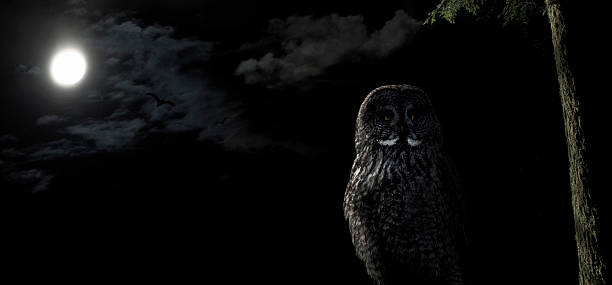 owl perched in tree at night under a full moon - owl stock photos and pictures
