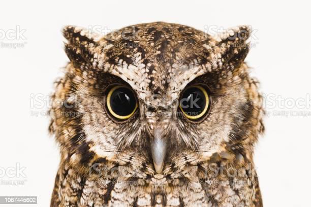Photo of Owl
