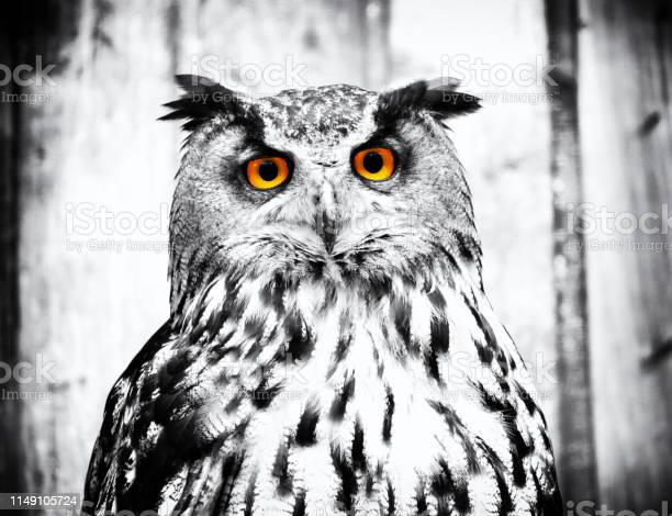 Owl picture id1149105724?b=1&k=6&m=1149105724&s=612x612&h=z 1a sprumiouhukusnuijlsofnjkwvngbwqcbsxvgc=