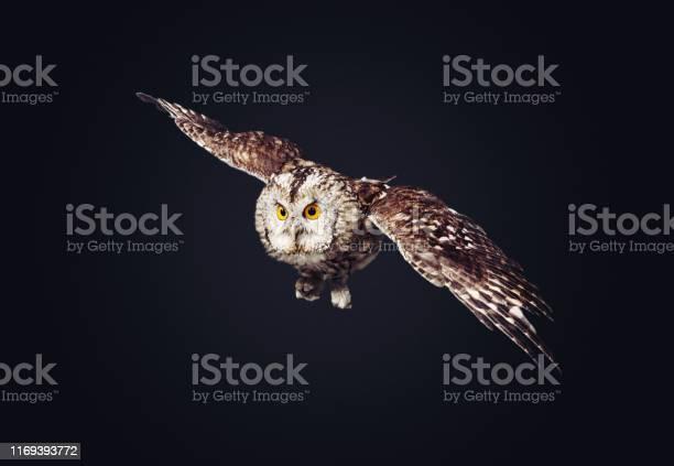 Owl picture id1169393772?b=1&k=6&m=1169393772&s=612x612&h=0lygpfa3zrmjjfuilhlwtjcam4 p790qp16lzz3ituy=