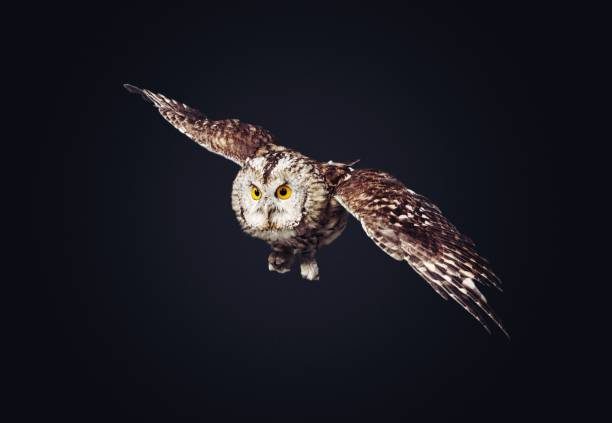 Owl picture id1169393772?b=1&k=6&m=1169393772&s=612x612&w=0&h=9zgy yysrx4ml3ksxmxfsj3oplwzyorby9r1bdldgze=