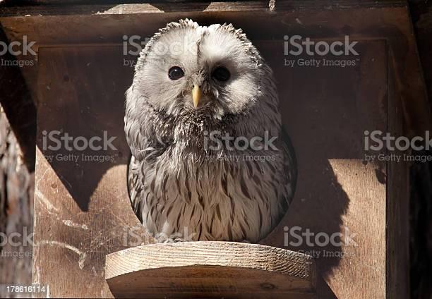 Owl picture id178616114?b=1&k=6&m=178616114&s=612x612&h=rssmsrdfef8jsatldsoggvjewfc4xwldq6lk8tv856u=
