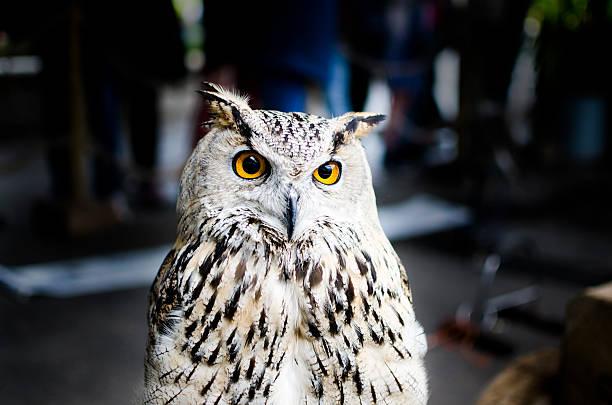 Owl picture id187165147?b=1&k=6&m=187165147&s=612x612&w=0&h=krmsaykn8fhes7jtfycb p1 w3jtxd rlanb unnp2q=