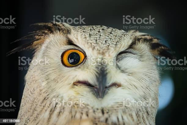 Owl picture id491184966?b=1&k=6&m=491184966&s=612x612&h=asdldmxamfradmhfoobdk8wpe7zn5mwclpb npqyw1c=
