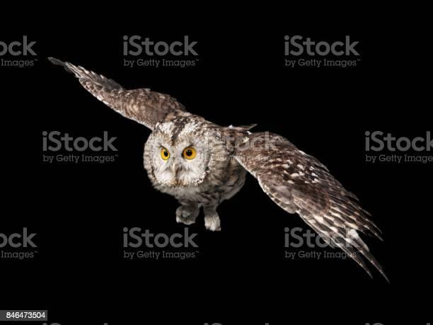 Owl picture id846473504?b=1&k=6&m=846473504&s=612x612&h=b5mt12 xd98go920cawfr wjegz jf1lk d8knzamhu=
