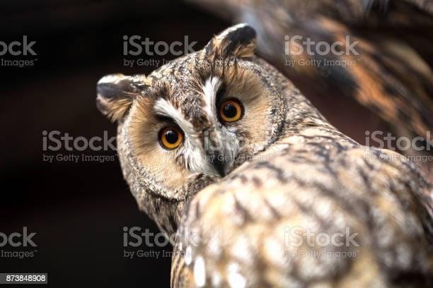 Owl picture id873848908?b=1&k=6&m=873848908&s=612x612&h=a4whbzmcpdjgpovobexgc1sl7fhj9hupztbrwbzpope=