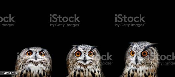 Owl portraits picture id942147130?b=1&k=6&m=942147130&s=612x612&h=r2kzrzkazmnknuni a80vj1ar9wmydauy80dun7hcqk=
