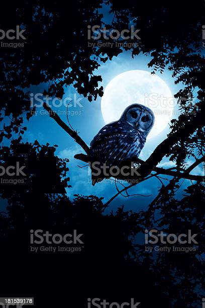 Owl watches intently illuminated by full moon picture id181539178?b=1&k=6&m=181539178&s=612x612&h=gu lp  al7wbdda vv3ez7b1ucikvspa 5jsit0jlaq=