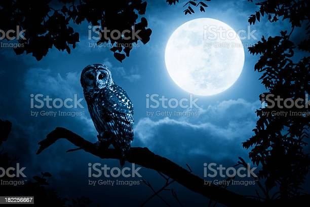 Owl watches intently illuminated by full moon picture id182256667?b=1&k=6&m=182256667&s=612x612&h=oq1dgtiub07bkptj7emctntb9vgroqlylghxkev54oy=
