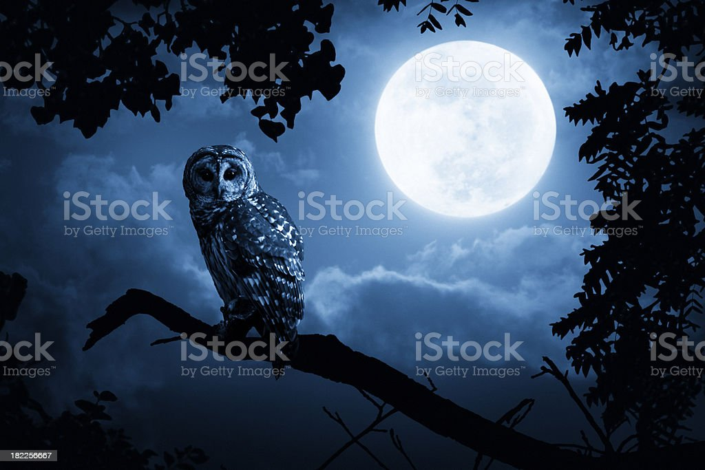 Owl Watches Intently Illuminated By Full Moon stock photo
