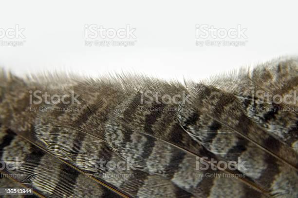 Owl wing feathers picture id136543944?b=1&k=6&m=136543944&s=612x612&h=w0nrywba3mftbxdmyl z9kqv9j8jhpahuvcd39zrfk0=