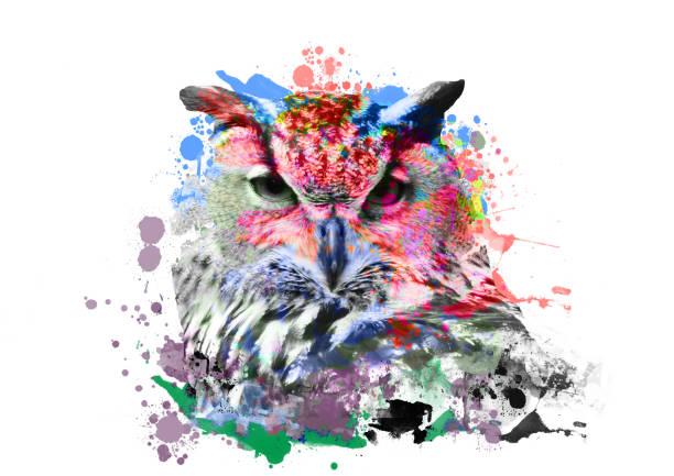 eule mit abstrakten farbe auf weißem hintergrund - eule zeichnung stock-fotos und bilder