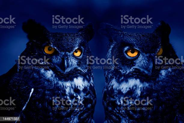 Owls at night picture id144971331?b=1&k=6&m=144971331&s=612x612&h=uqrg2ch4ym9lmk v 2ebr32b2ylybkekfalzfc6 cr4=