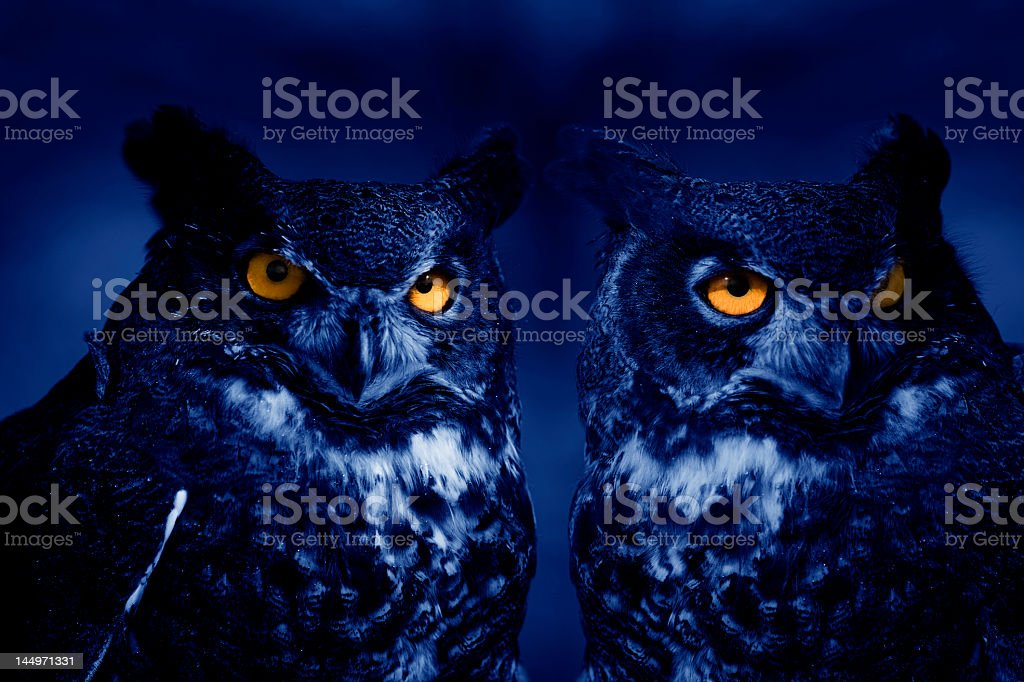 Owls at night stock photo