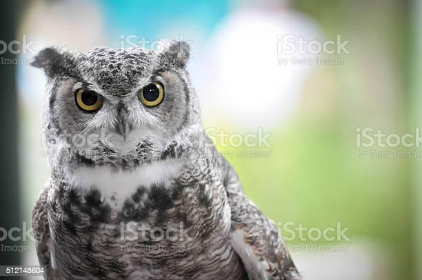Owls head picture id512148604?b=1&k=6&m=512148604&s=612x612&h=y1ks6wem5et3tm lwqrdy1j8panrrylnvplygrb 54m=