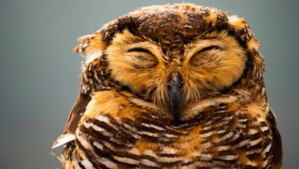 Owls on the branch picture id1096566242?b=1&k=6&m=1096566242&s=612x612&w=0&h=qgf  nh5lhe99wuyg  0exnwieuid kgaskoe efx4g=