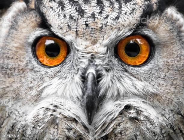 Owls portrait owl eyes picture id927474628?b=1&k=6&m=927474628&s=612x612&h=unm t8kf9dcqcuactbijtfofe2gm8ufofqwdvjbzj 8=