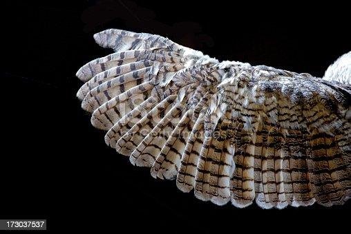 Black raven feathers close up
