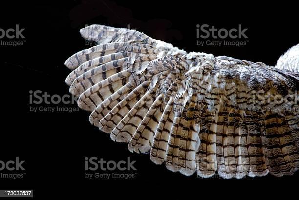 Owls wing closeup picture id173037537?b=1&k=6&m=173037537&s=612x612&h=xzh 8zdj0zyxv9bynrqwaym5toveax1ka2q9onh199i=