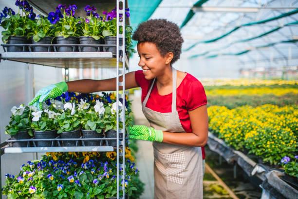 Eigentümer, die Vermittlung von Blumentöpfen auf Regal im Gewächshaus – Foto