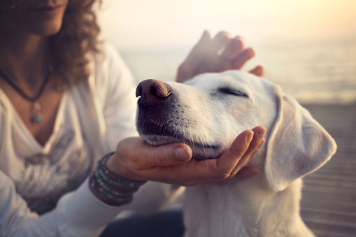 istock owner caressing gently her dog 532262202