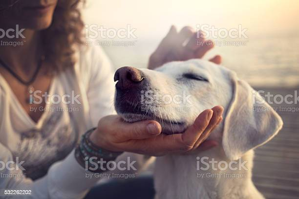 Owner caressing gently her dog picture id532262202?b=1&k=6&m=532262202&s=612x612&h=a1qsrkocvfdhy9mvoxuaoet suvpkvr5zpbkkho8nnc=