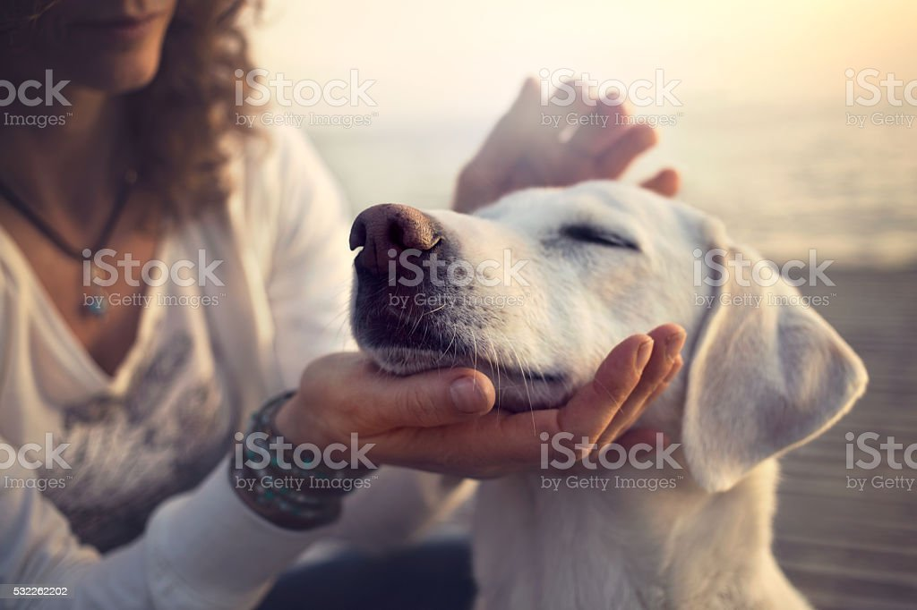 owner caressing gently her dog bildbanksfoto