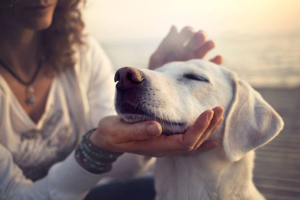 owner caressing gently her dog owner caressing gently her dog snout stock pictures, royalty-free photos & images