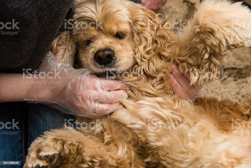 Inhaber Check Hund Brust von Insekten und Zecken – Foto