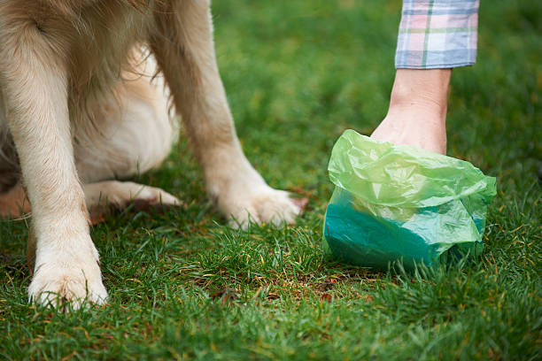 Owner Clearing Dog Mess With Pooper Scooper Responsible care of pet poop stock pictures, royalty-free photos & images