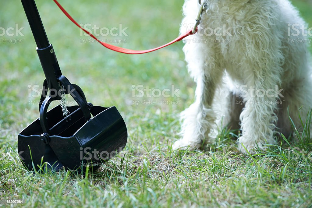 Owner Clearing Dog Mess With Pooper Scooper stock photo