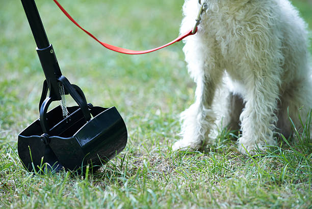 Owner Clearing Dog Mess With Pooper Scooper Owner Clearing Dog Mess With Pooper Scooper poop stock pictures, royalty-free photos & images