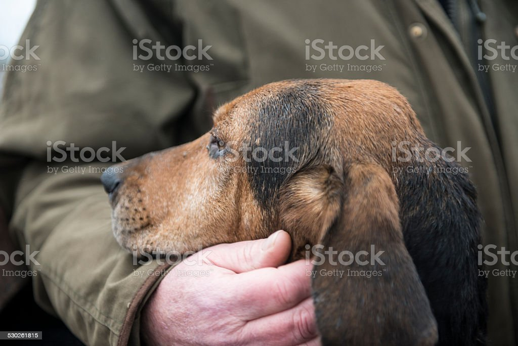 owner comforts his hound stock photo