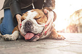 istock owner gently caressing her dog in an urban place 613748740