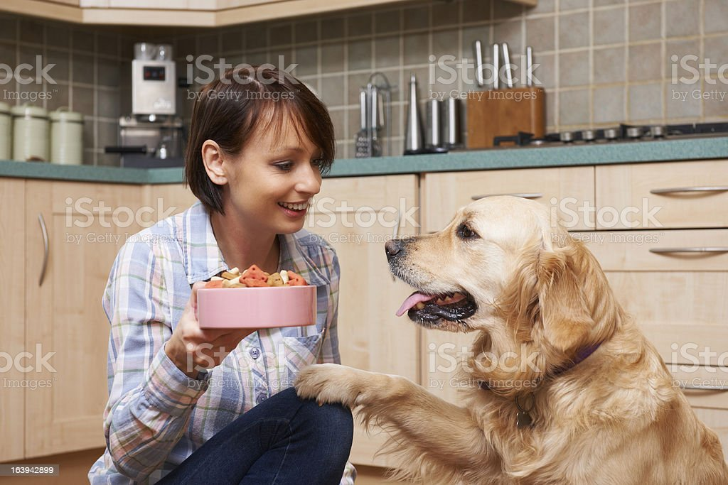 Owner Giving Golden Retriever Meal Of Dog Biscuits In Bowl stock photo