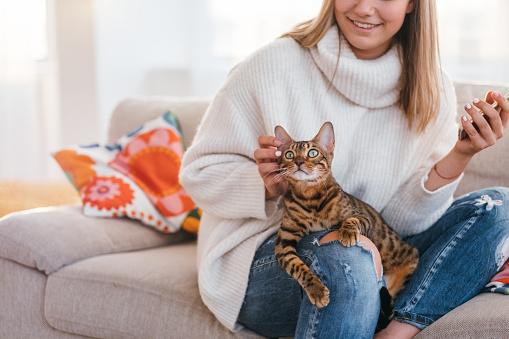 istock owner love tenderness girl scratching cat 916389482