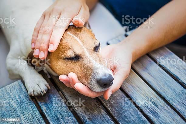 Owner petting dog picture id485959866?b=1&k=6&m=485959866&s=612x612&h=ouz0nk5leq1ttaz9j57iuhsypm3mvaevghwp3 mxoz4=