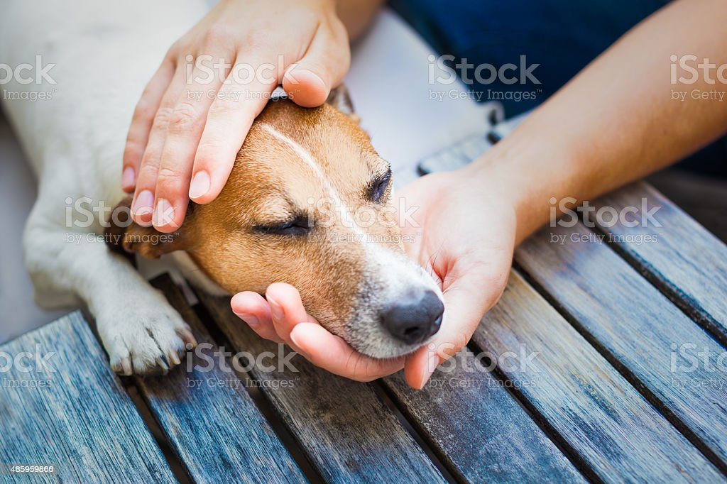 owner petting dog stock photo