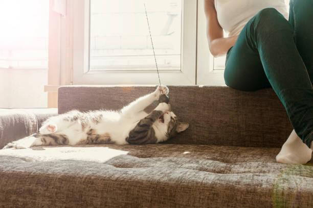 Owner playing with cute funny cat at home picture id871361154?b=1&k=6&m=871361154&s=612x612&w=0&h=pejqwj27f4qihtlubgfyxav14yq8ao0nghcx  6fg0y=