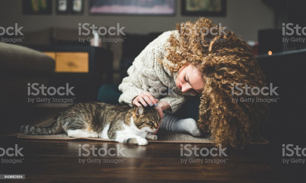 Owner playing with cute funny cat at home stock photo