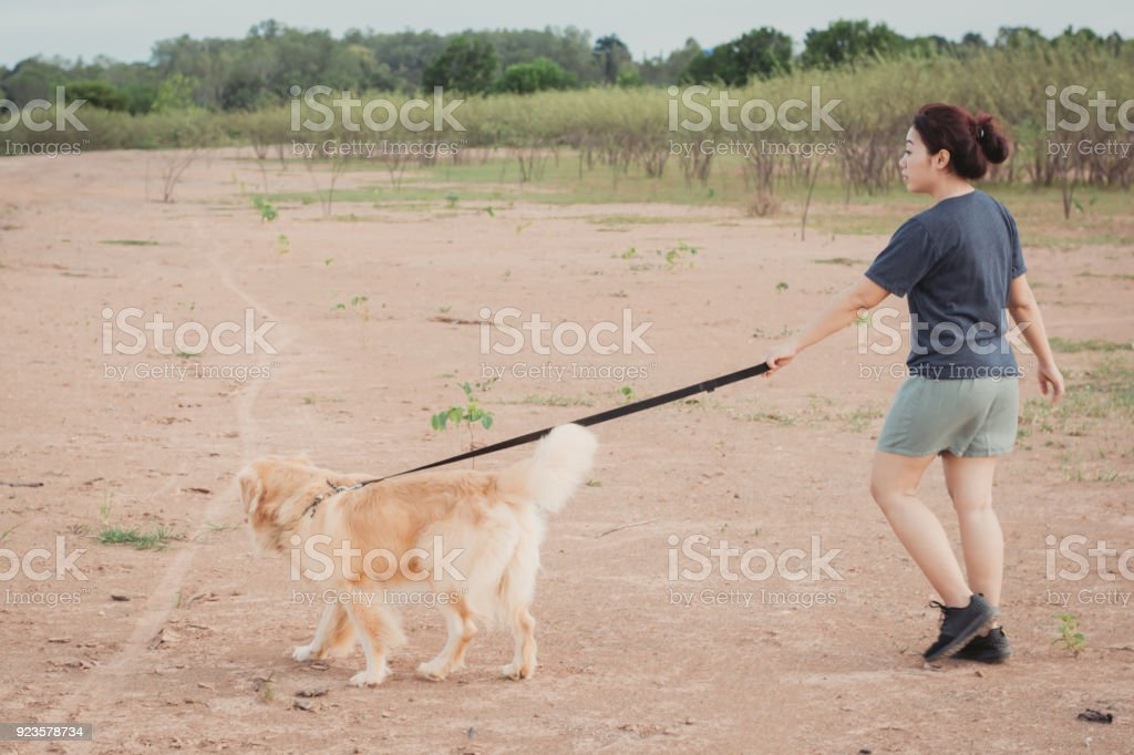 Owner walking with Golden Retriever dog together stock photo